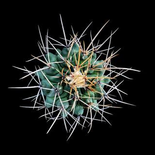 cactus - 188.jpg