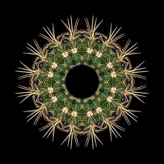 cactus mandalas - 31.jpg