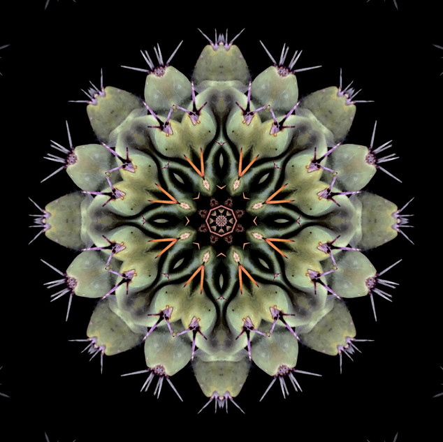 cactus mandalas - 119.jpg