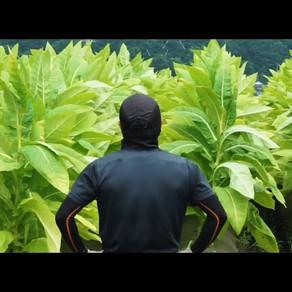 【Honmono Movie】日本たばこ産業株式会社の映像が公開されました!