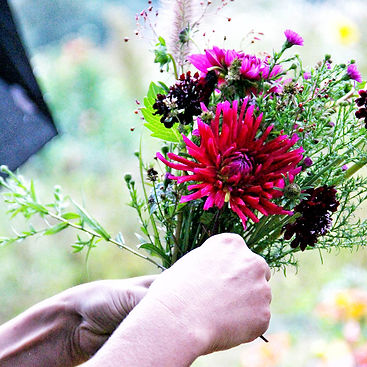 Vom Hügel Bio Blumen