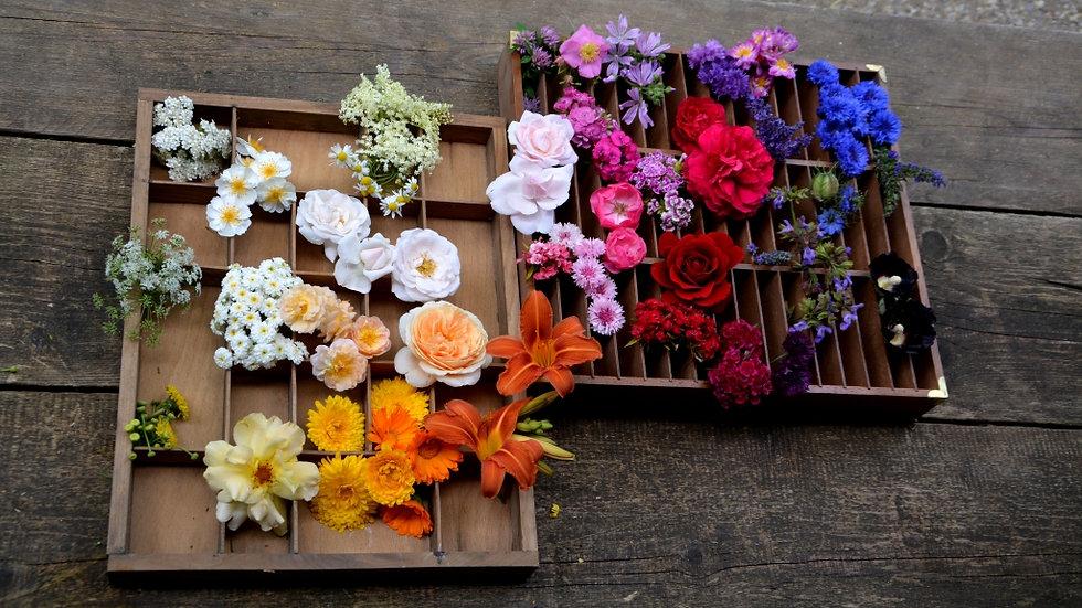 BIO Saatgut Mischung Essbare Blüten