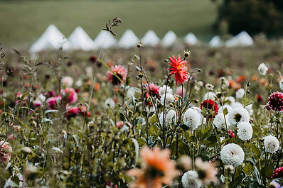Bio Blumenfeld Vom Hügel.jpg