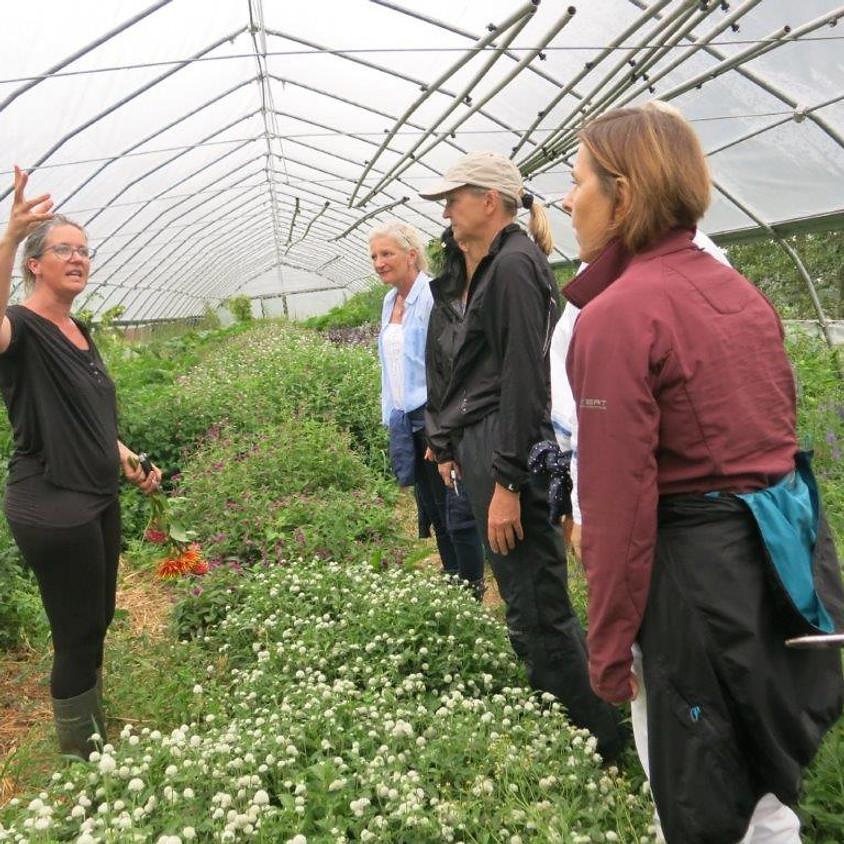 Eigene Schnittblumen - Projekte, Teil 2 - Fortgeschrittene