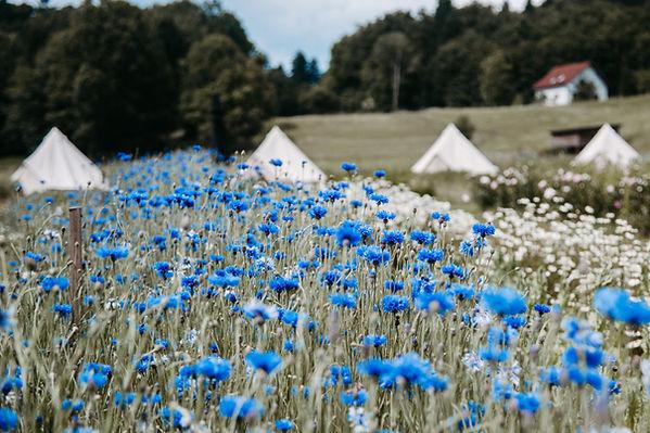 Übernachten im Glamping Zelt am Bio Blumen Bauernhof.jpg