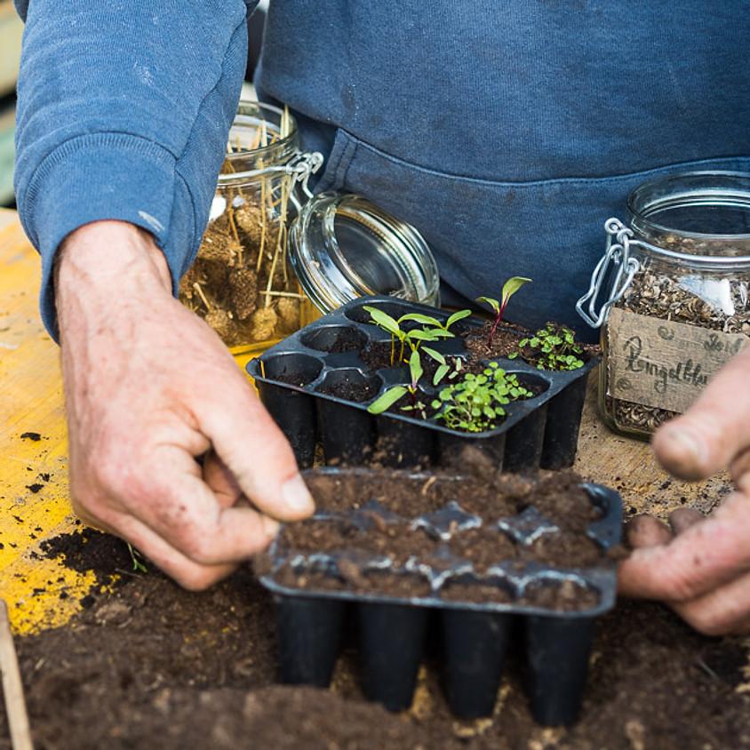 BIO Gemüse Raritäten : Vom Samen zur Ernte