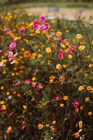 Bio Blumen frisch vom Feld.JPG