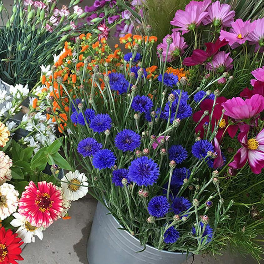 Vom Hügel beim Grazer Raritäten Markt im Botanischen Garten