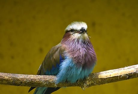 bird-4296991__480[1].jpg