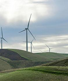 wind crop_2.jpg