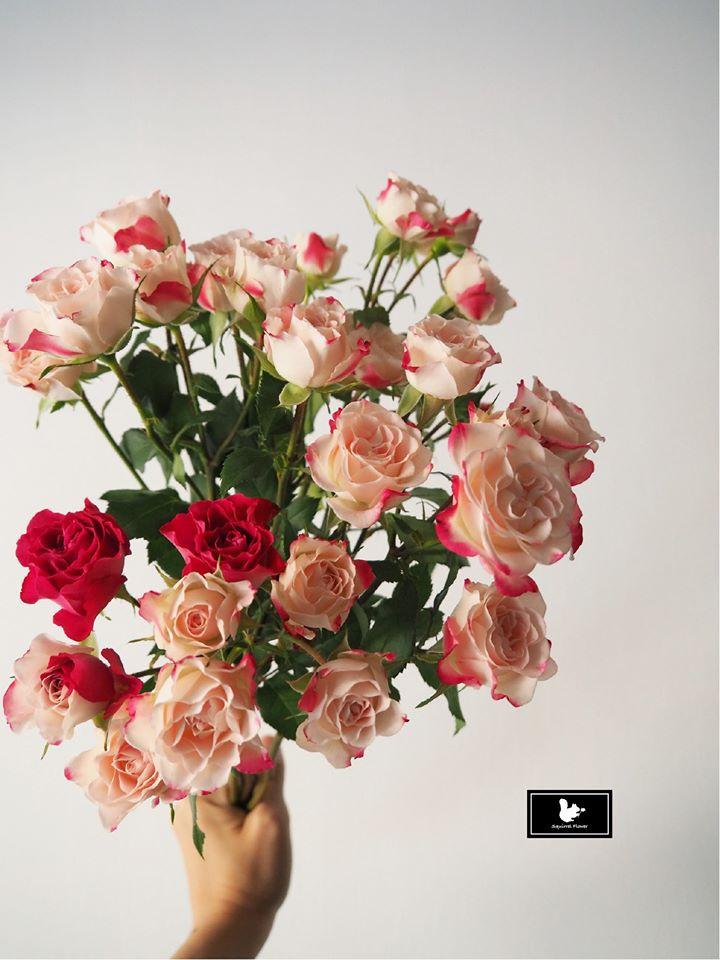 迷你玫瑰 Rosa rugosa