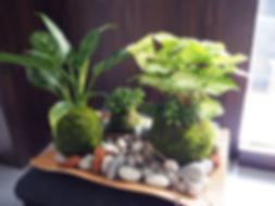 蘭花,植栽,多肉植物,苔球