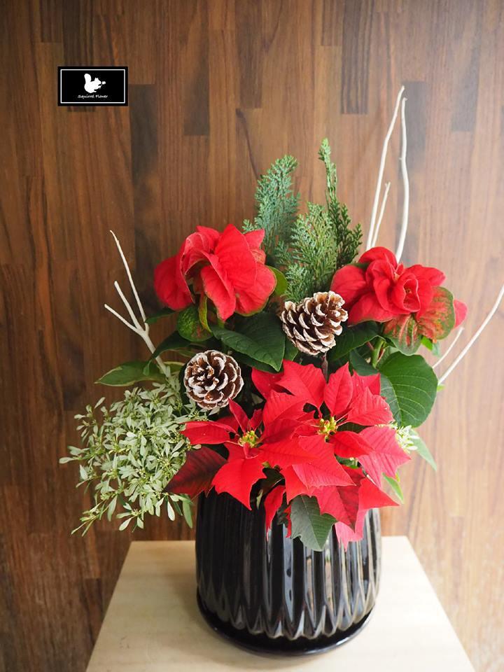 聖誕紅盆花