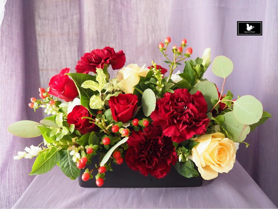 康乃馨盆花