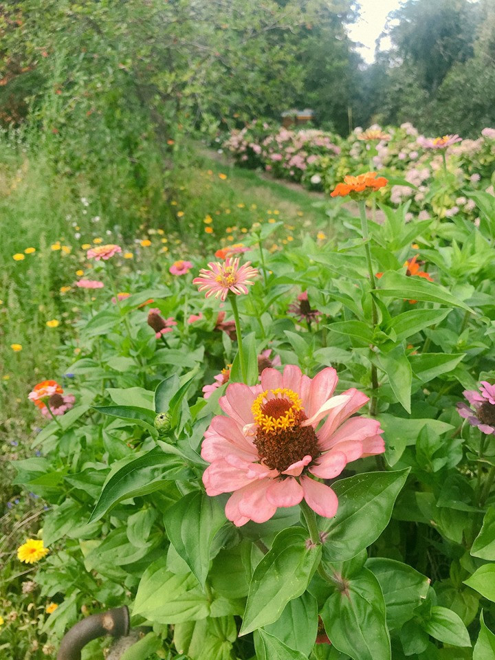 Blumen Werk Schule