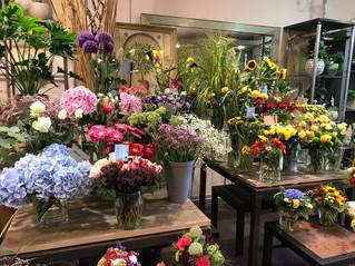 德國花店參訪