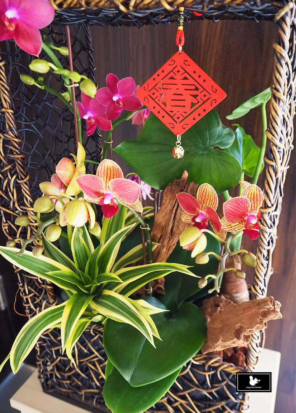 過年;新年;盆花;蘭花