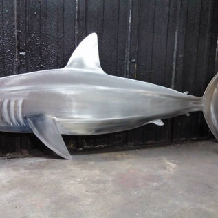Shark (5).jpg