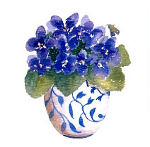 Violets Gift Card
