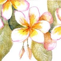 Frangipani Gift Card