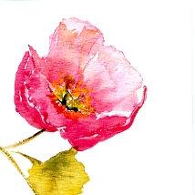 Pink Poppy Gift Card