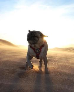 Mondays_ the sandstorms that is unexpect