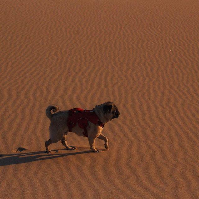 🎵Squish-faced Mack hunts for desert sna