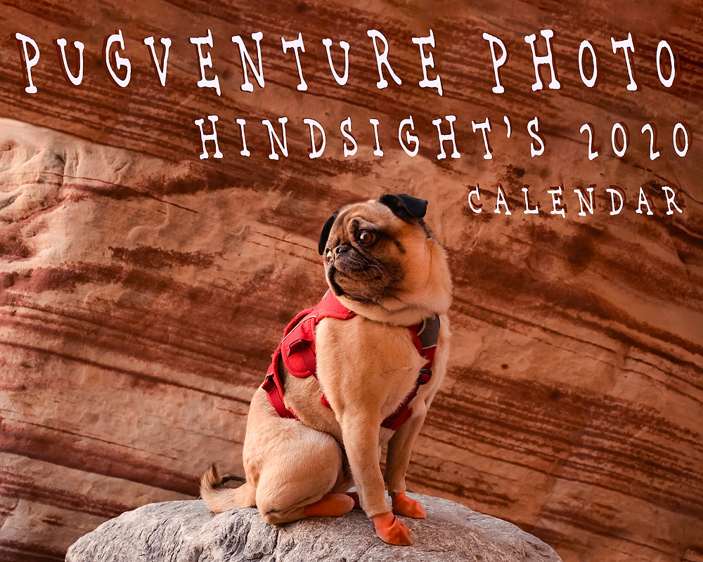 "Pugventure Photo ""Hindsight's 2020 Calendar,"" featuring celebrity pet, Mack the Adventure Pug!"