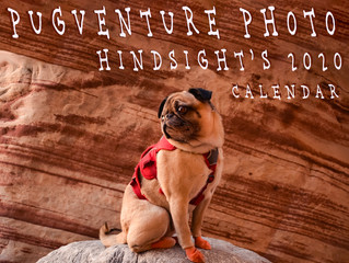 "Endless smiles for The New Year: The Pugventure Photo ""Hindsight's 2020 Calendar"" avai"