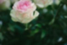 Rosa Esperanza.