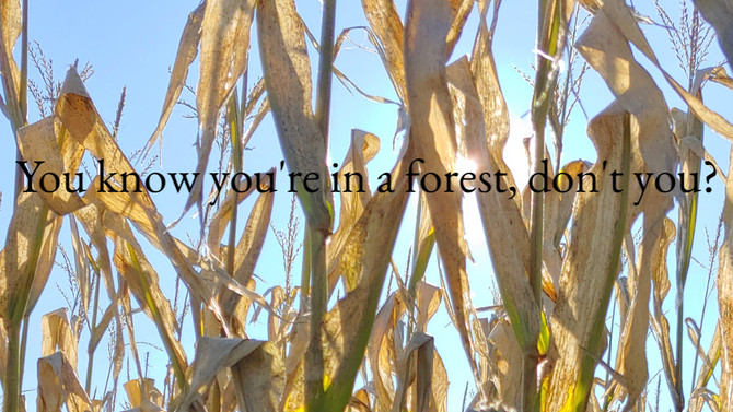 You know you're in a forest, right?