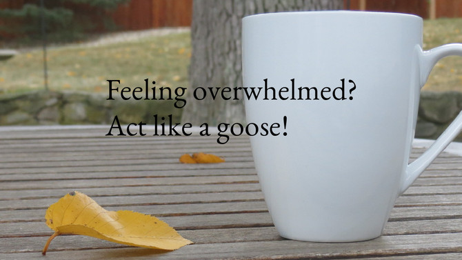 Overwhelmed? Act like a goose!