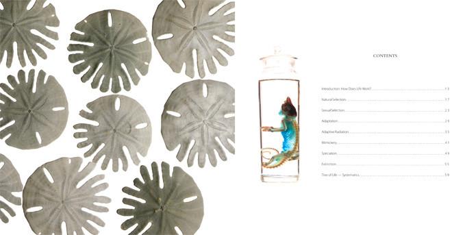 Informational Book Art Direction & Design