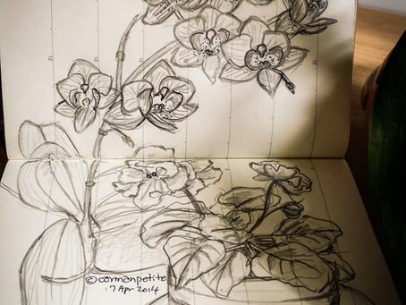 Orchid Viola