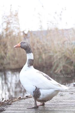 Anton am Teich