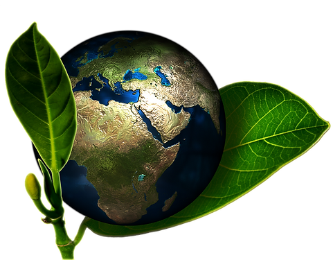 earth-leaves_edited_edited.png