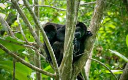 montezuma wildlife, costa rica