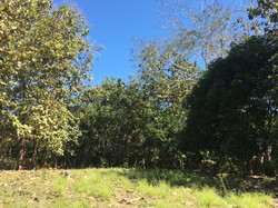 montezuma land for sale