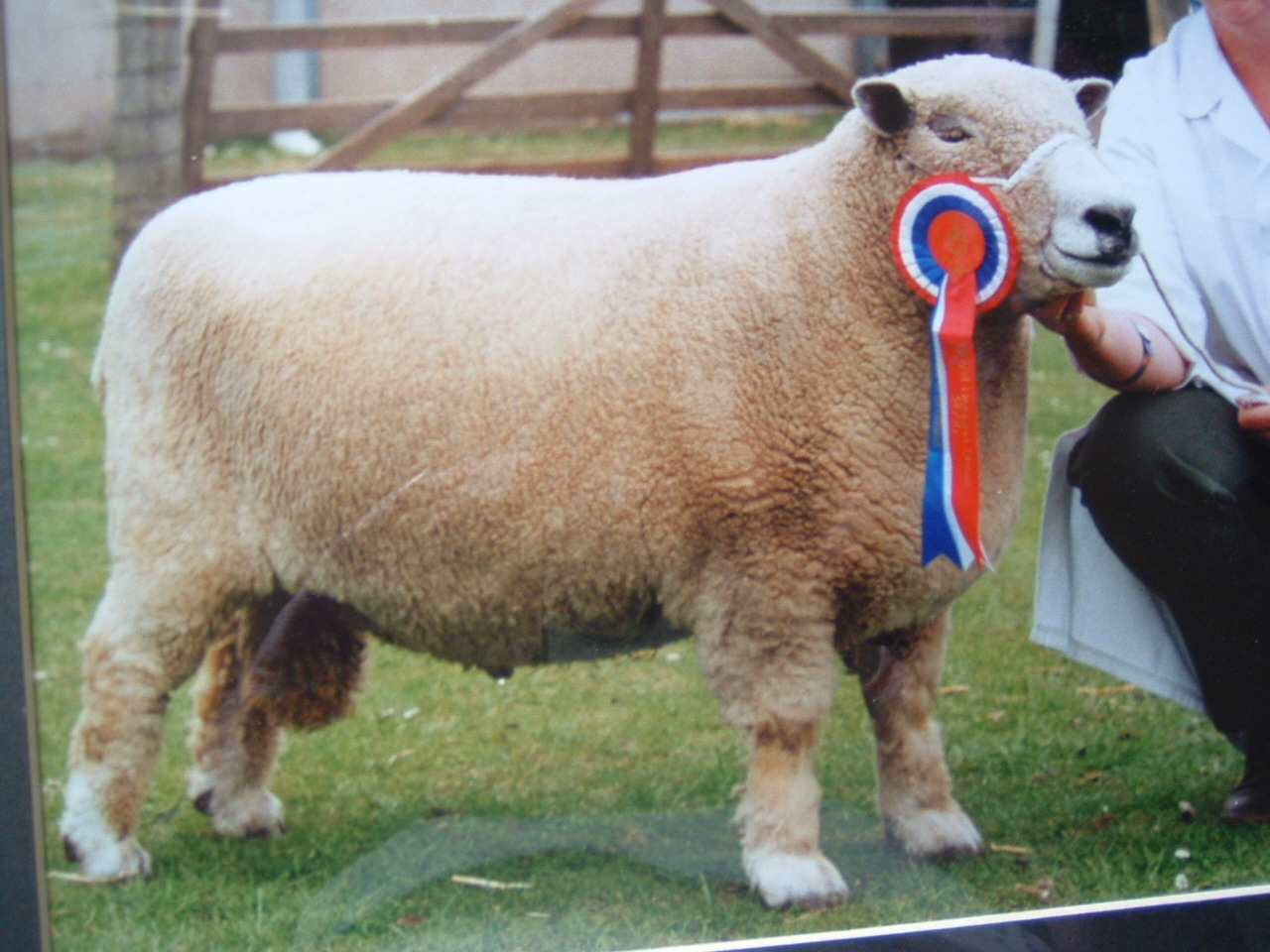 Royal Highland Show 2000