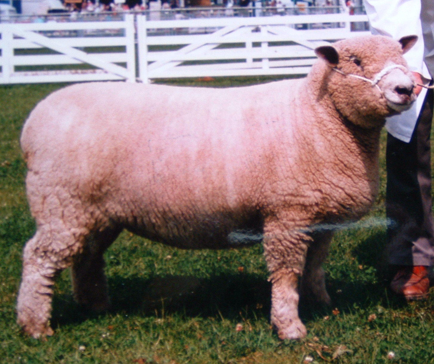 Great Yorkshire Show 1997