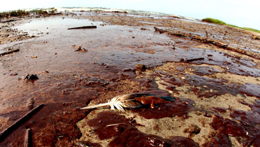 oil stain stained marsh.bmp