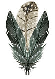 feathers image.jpg