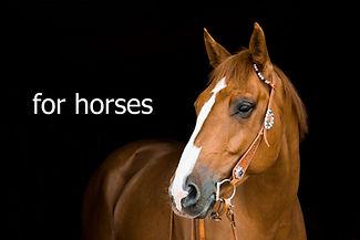 for-horses-1024x683.jpg
