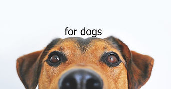 for-dogs-1024x537.jpg