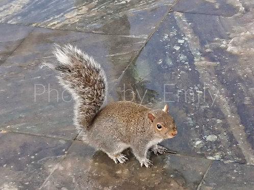 "Squirrel on Ice 8x10"" Photo"