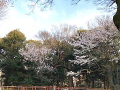 Snapshot Tokyo 日本街頭 2017