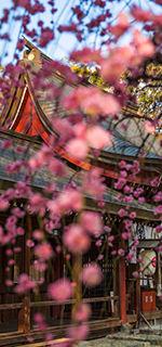 富部神社, 祭文殿, 梅