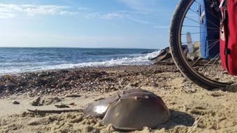 New England & Eastern Seaboard: Week 3