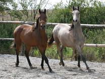 Heste_2.jpg