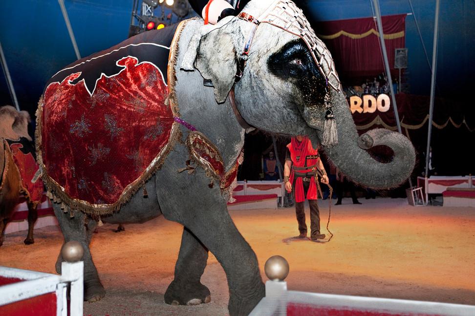 26  Dumbo